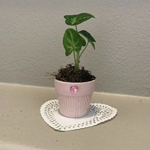 "Syngonium Neon ""Pink Allusion""- Starter Plant"
